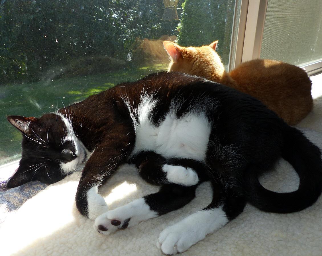 Where\'s the Birdbath Cats | Perkins and Teeny Tuxedo